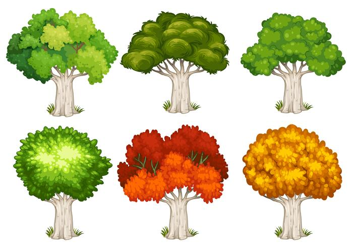 formas de árbol genealógico
